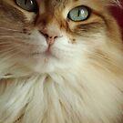 The inspiring cat calendar by Marie-Eve Boisclair