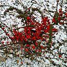 Winterous by George Parapadakis (monocotylidono)