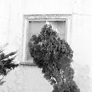 Crooked Windows, Los Feliz, CA October 2010 by joshsteich