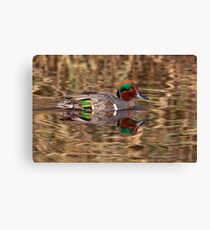 Green Winged Teal Reflections Canvas Print