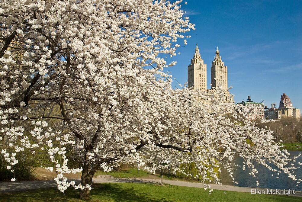 Central Park in Spring by Ellen McKnight