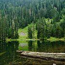 Mckay Lake by Michael Garson