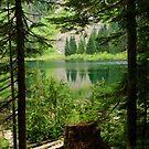 Mckay Lake through the trees 2 by Michael Garson