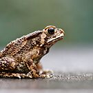Toad Bufo by Normf