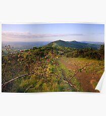 Malvern Hills : Autumn Berries Poster