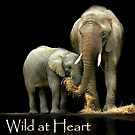 Wild at Heart Calendar Cover by Stephie Butler
