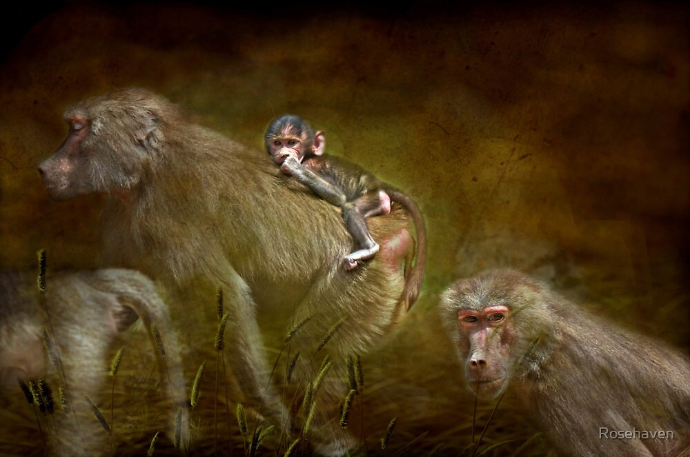 """Hamadryas Baboon..."" by Rosehaven"