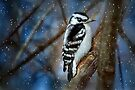 On A Cold Winter Night by Elaine Manley