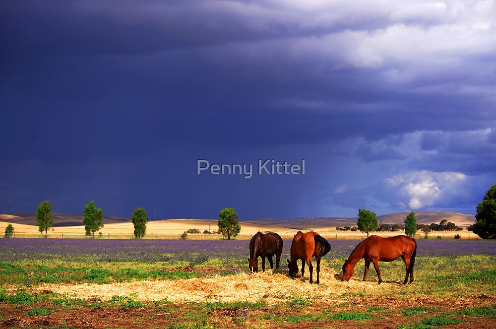 While the sun shines by Penny Kittel
