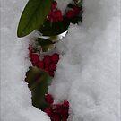 Snowed in by Photos - Pauline Wherrell