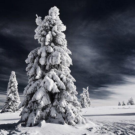 White Ink by Philippe Sainte-Laudy