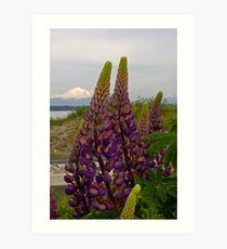 lupin and mt baker Art Print