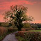 Taking the Scenic Route  by hootonles