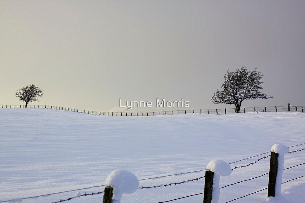 Twin Trees by Lynne Morris