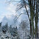 Winter by Ann Garrett