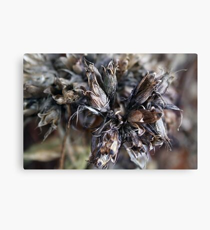 Bouquet of Fairy  for Christmas Canvas Print