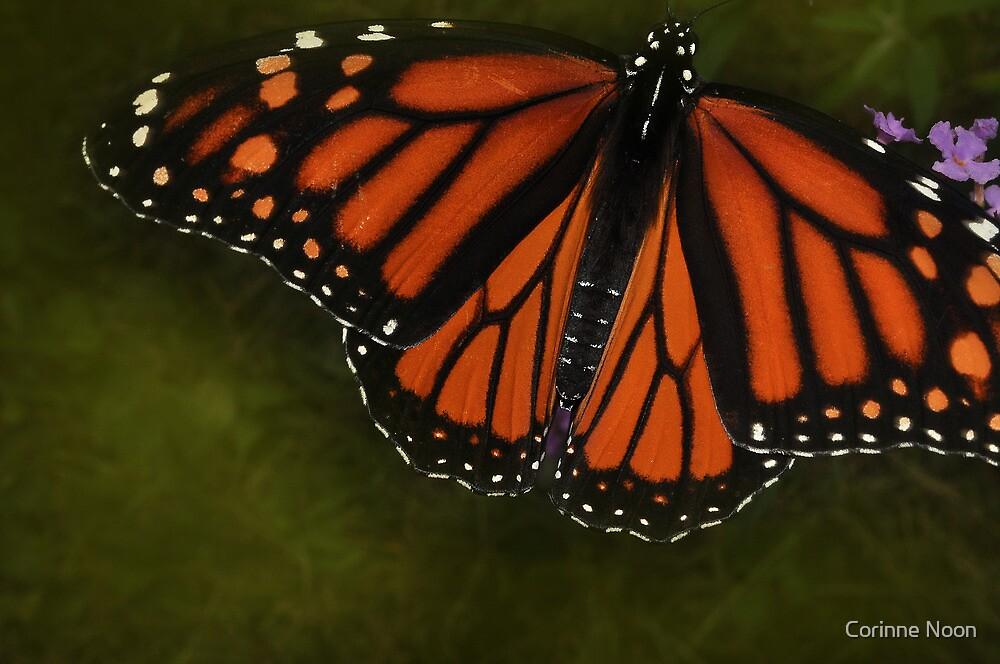 Butterfly Below by Corinne Noon