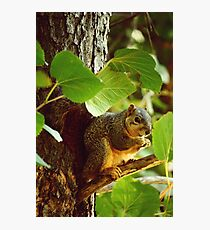 RODENT MADNESS Photographic Print
