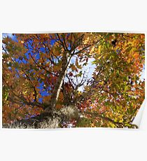Fall In Tallahassee Florida Poster