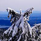 Snow Angel by Michael Garson