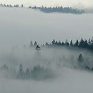 There be fog in the air by Michael Garson