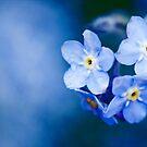 Blue Days by Josie Eldred