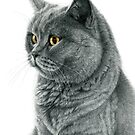 Chartreux cat G112 by schukinart