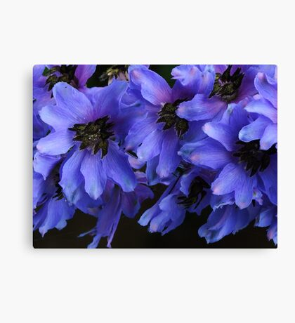 Pacific Giant Black Knight Delphinium! Canvas Print