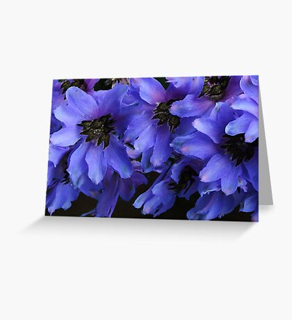 Pacific Giant Black Knight Delphinium! Greeting Card