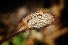 Caterpiller on a Poppy Seedpod by Eve Parry