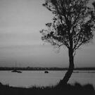 Sheoak Silhouette by Michael John