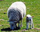 Painting Sheep (for paintingsheep) by David Carton