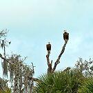 Eagles by MKWhite