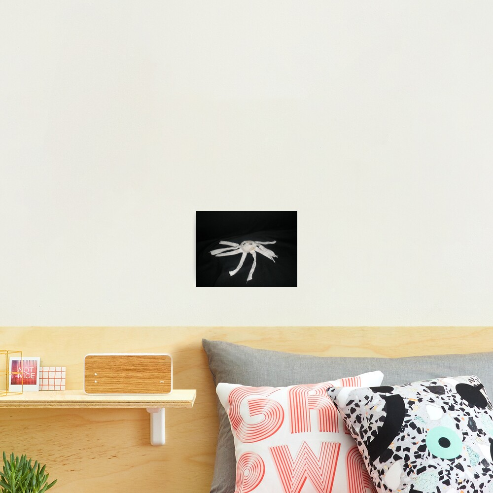 white spider Photographic Print