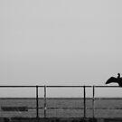 Cormorant by LockwoodEcho