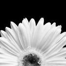 Daisy by Jeffrey  Sinnock