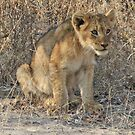 Ximungwe cub(Mom what is downthere ?) by Anthony Goldman