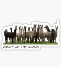 llamas  Sticker