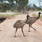 Excuse us whilst we cross the road by Michael Selge
