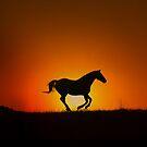 Galoppierendes Pferd im Sonnenuntergang von Stephanie Laird