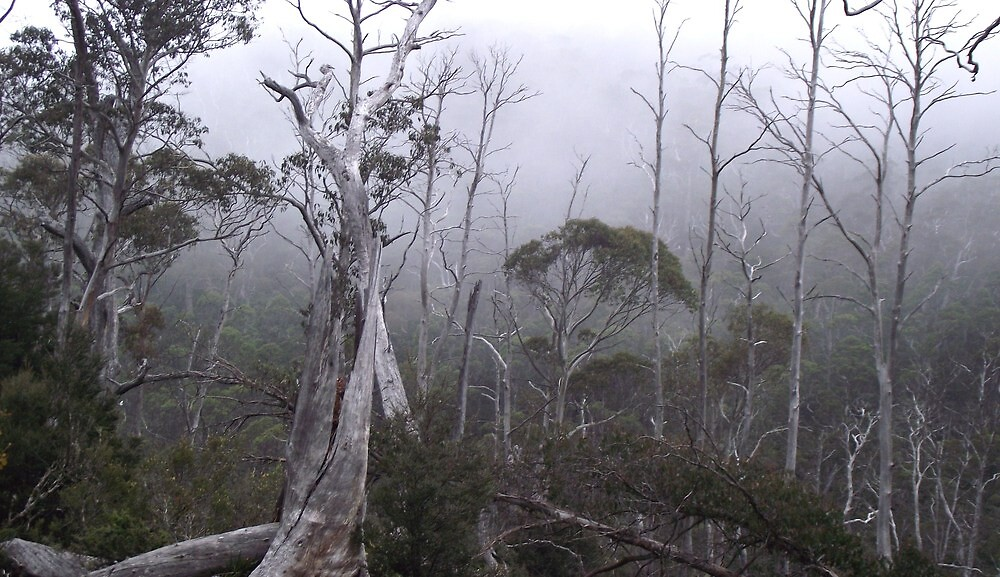 Cradle Mt bush fog by gaylene