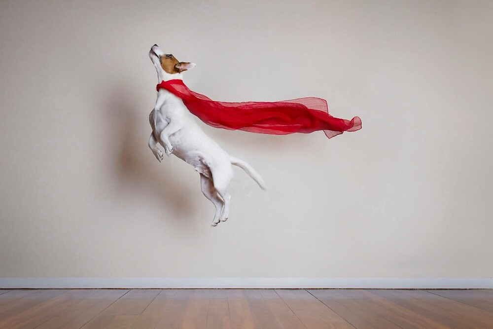 Quot Super Dog Quot By Catherine Holmes Redbubble