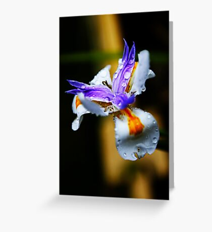 Dietes Greeting Card