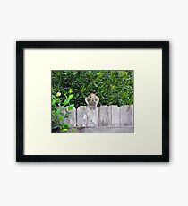Poppin' in to Say Hello! Framed Print