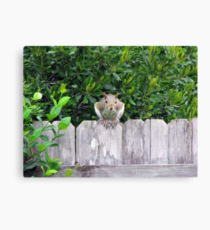 Poppin' in to Say Hello! Canvas Print