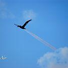 Pell Air by JpPhotos