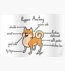 Pupper Anatomy Poster