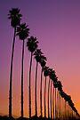 Redlands Palm Sunset by photosbyflood