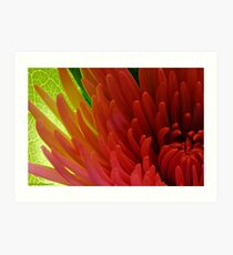 Backlit Art Print