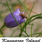 Ligurian Bees by saharabelle